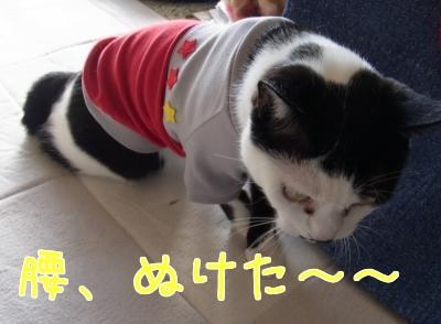 洋服ぴょん2縮小