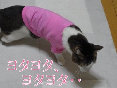 洋服ひめ3縮小