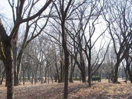 ひろし公園縮小7
