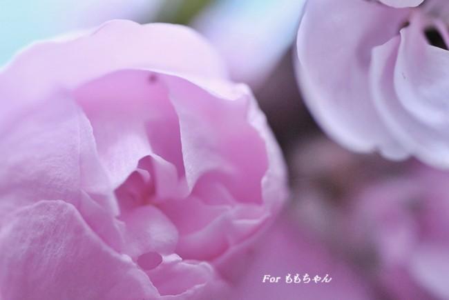 2012_04_22_02.jpg