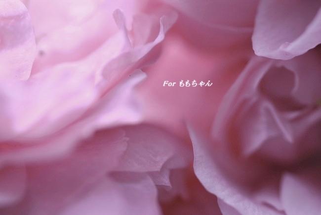 2012_04_22_04.jpg