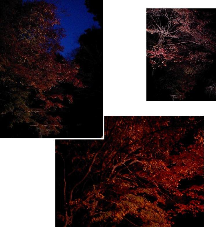 010 紅葉ライトアップ3