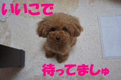 DSC07321_convert_20130107222635.jpg