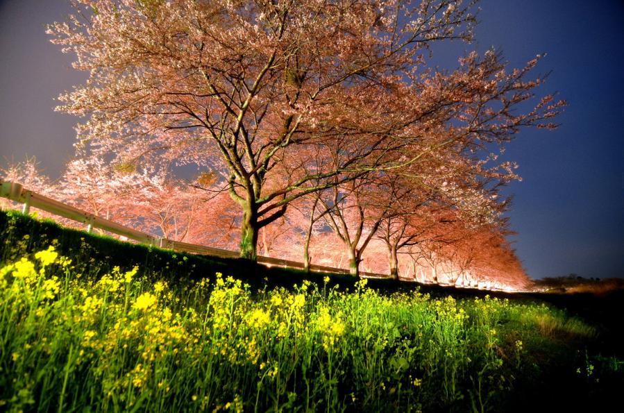 桜4.25 006-2ss