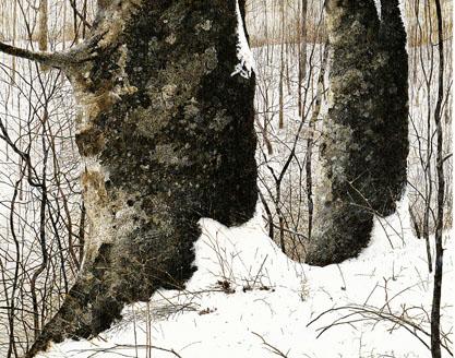 img_1724177_64205760_5二本のブナの木(冬)1988