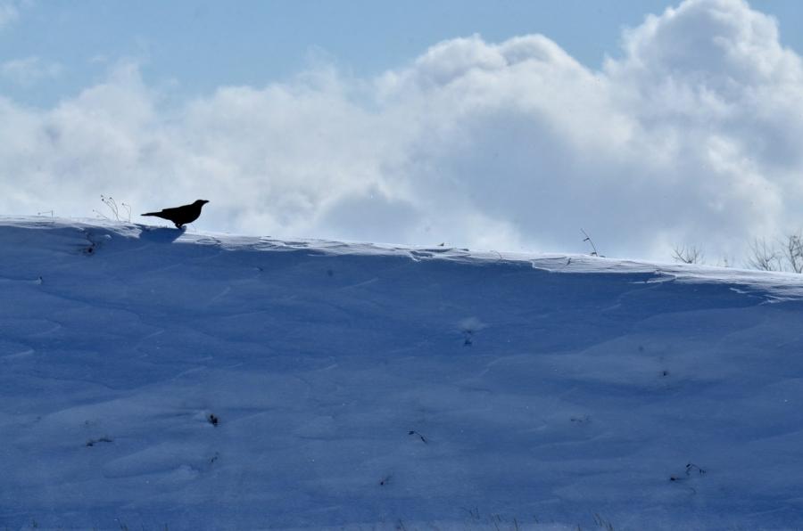 雪の日曜 237s