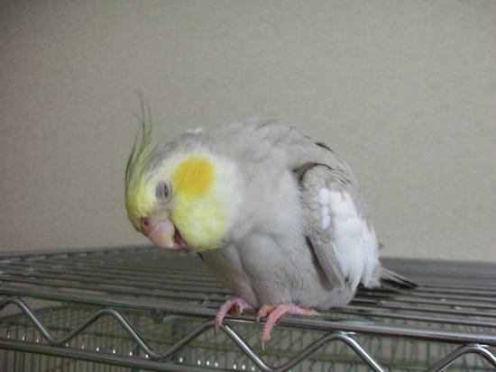 本当に鳥ですか!?