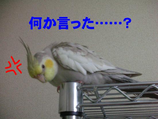 風、ご立腹!?