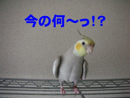塩土さんだよ(泣)