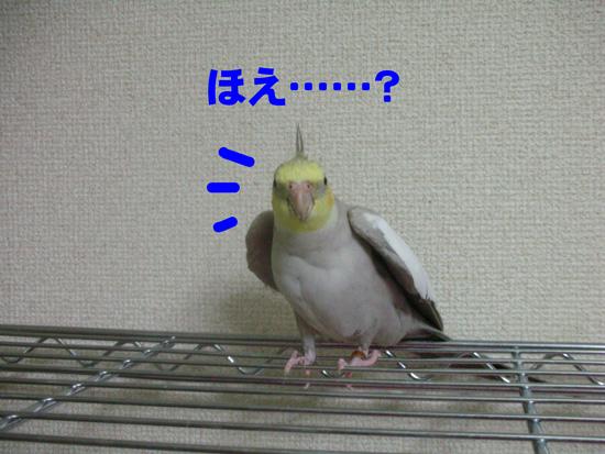 風、おいで~
