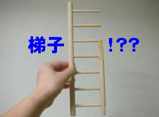 梯子……かな