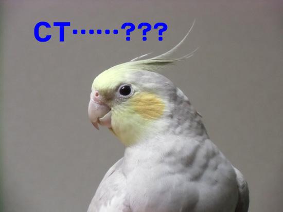 うん、CTだよ~