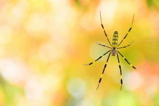 岡崎市 東公園 蜘蛛