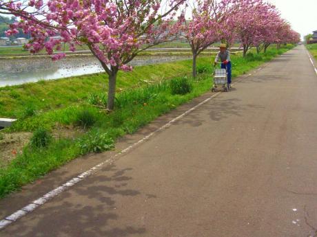 りんりんおじいちゃん散歩