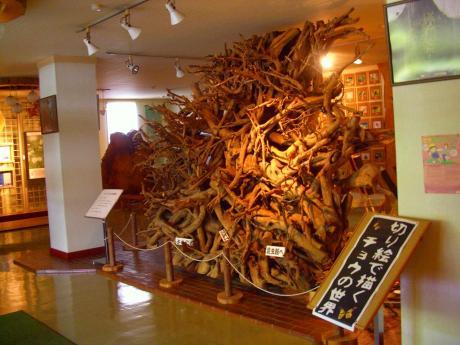 県民の森木の根