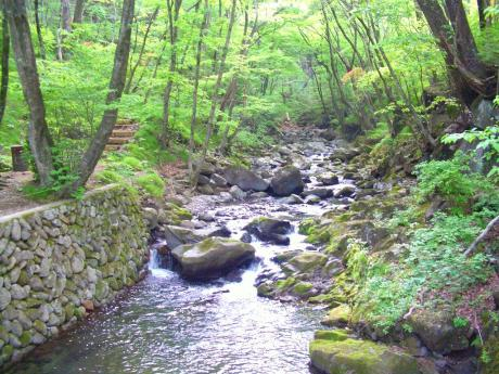 県民の森渓谷