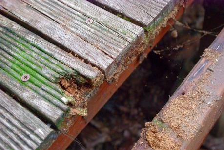 デッキ蟻2012