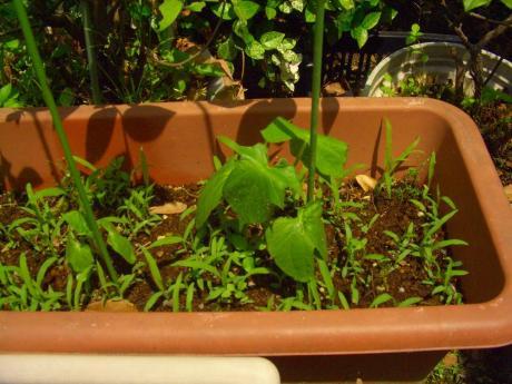 morninggrory120625.jpg