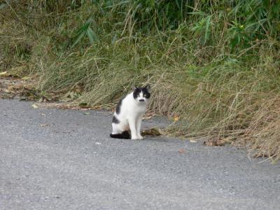 今日のネコさま1号
