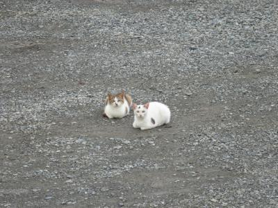 今日のネコさま3号