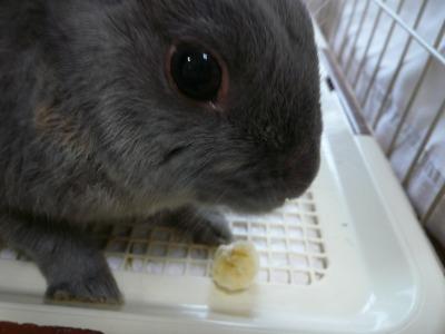 バナナは毎日食うもんだ!