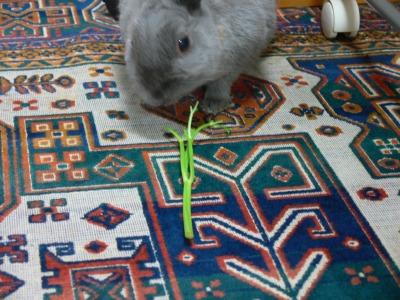 パセリの茎