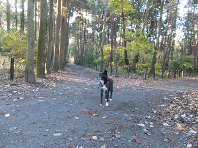 shimobashira5.jpg
