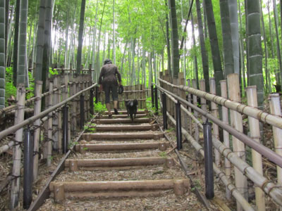 ushirosufgata.jpg