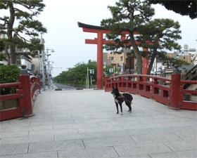 wakaremichi5-20-10.jpg