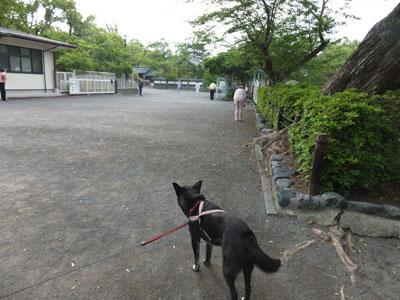 wakaremichi5-20-17jpg.jpg