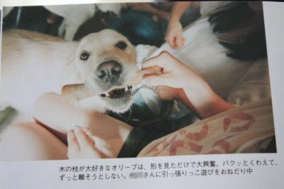 IMG_1771bokashi_convert_20120914110128.jpg