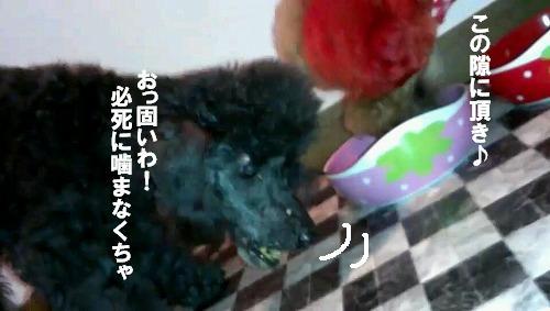 VIDEO0012_0000064636.jpg