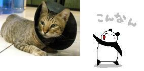 cat07_6_15-2.jpg