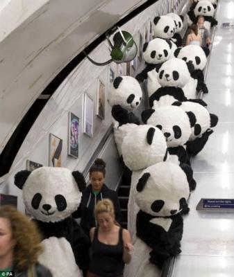 panda-PA-1-598x710_20120706171513.jpg