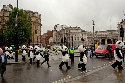 pandas-in-london_20120706171527.jpg
