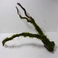 国産南米枝流木3