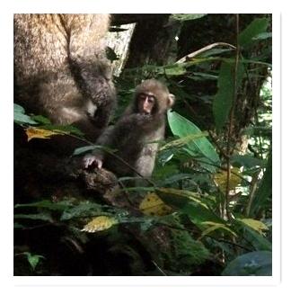子猿 - コピー
