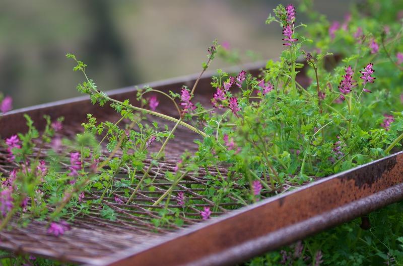 和歌山 南部梅林 脇路の花