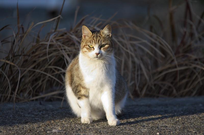 和歌山 有田川河口 猫