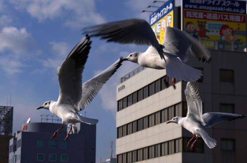 阪神尼崎駅 庄下川 カモメ
