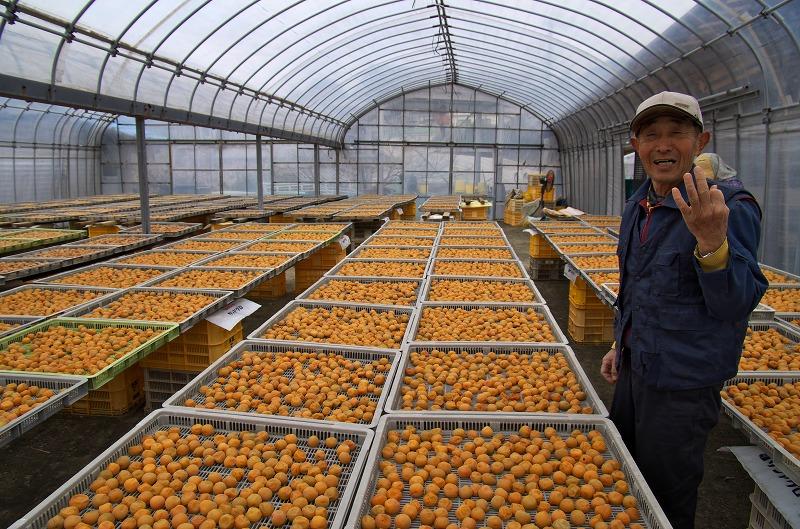 和歌山 南部梅林 梅農家