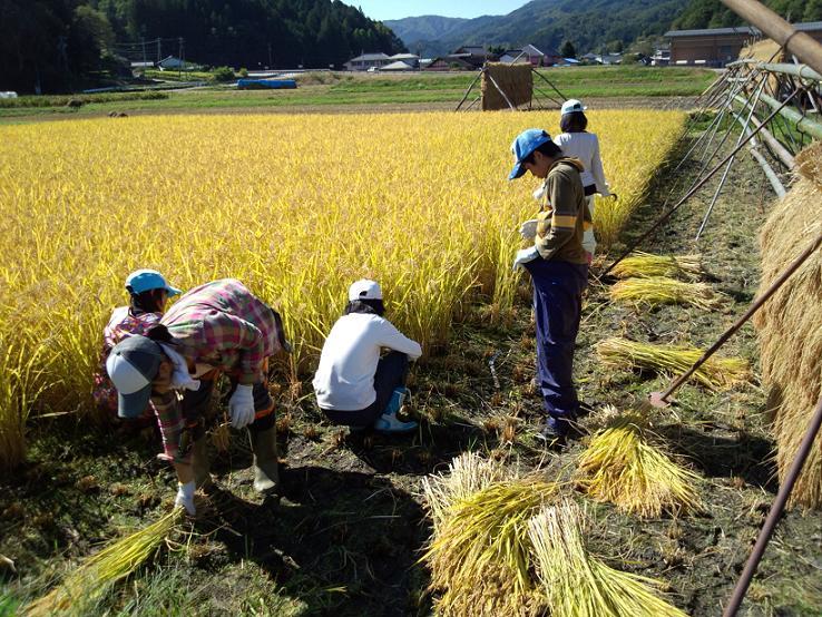 20121008_山留稲刈り-5