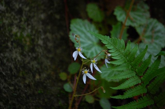 花の姿も、魅力的!