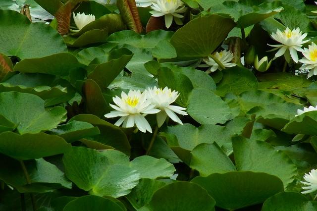 清楚な白い花、ずーむ!
