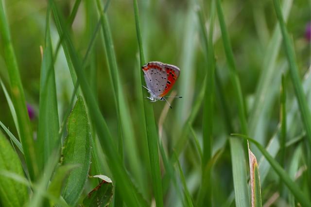 蝶も、見られるようになりました