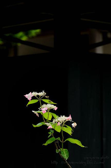 東慶寺にて