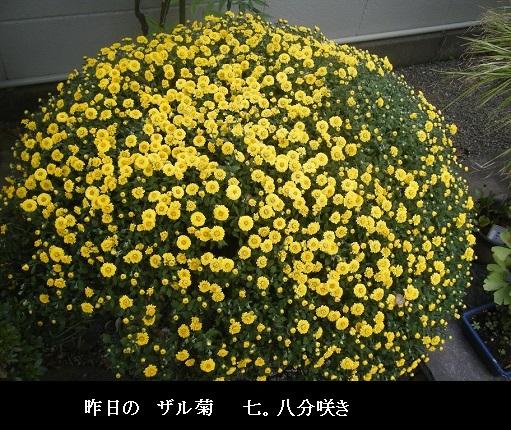 DSCF3206.jpg