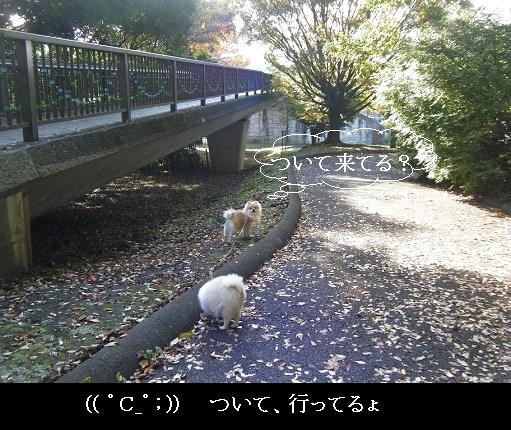 DSCF3372.jpg