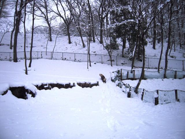 snow wanwanhureaihiroba1 (1)