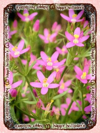 ピンクの草花